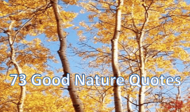 nature quotes that capture the beauty and wonder of our world