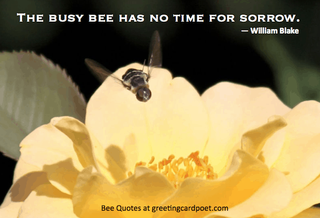 Bee quotes and sayings image