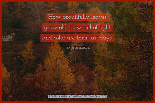 Colorful Autumn Quotes Image