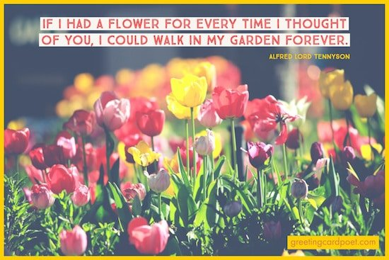 walk in my garden forever image