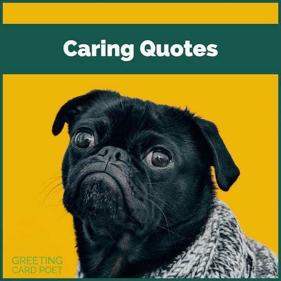 Kind Caring Quotes To Show You Understand Greeting Card Poet