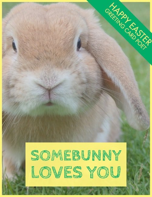 Somebunny Loves You image