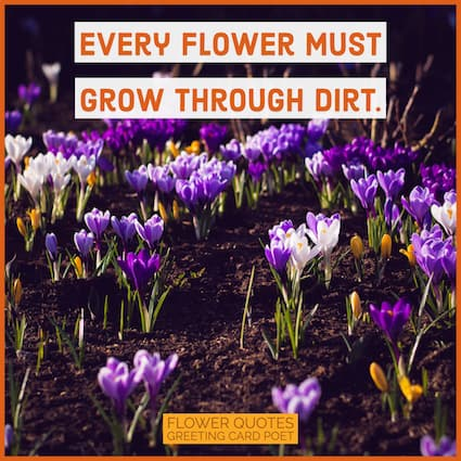 every flower must grow through dirt image