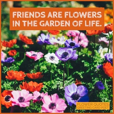 friends are flowers image
