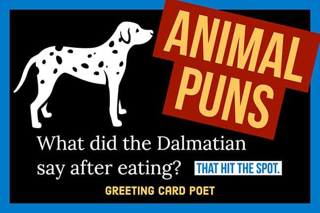 Animal Puns image