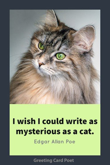 Cat Quotation by Poe image