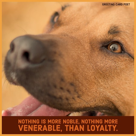 Nothing is more noble than loyalty image