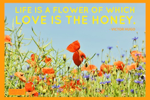 Life is a flower quote image