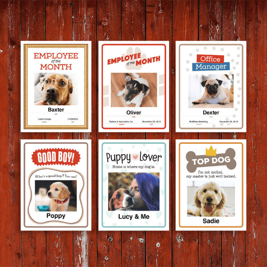 6 Dog certificates designs image