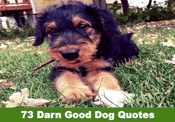 darn good dog quotes image