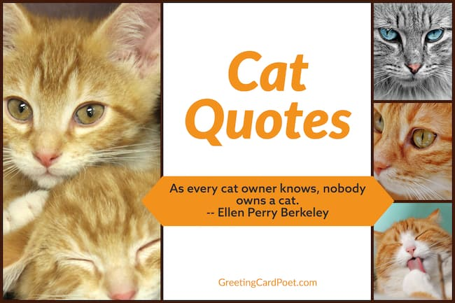 Cat Quotes image