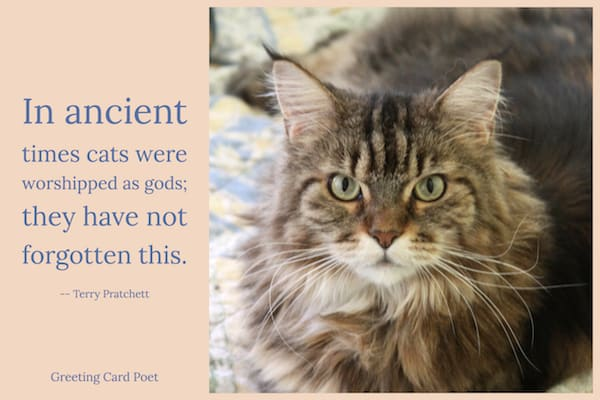 Cats were worshipped as gods quotation image