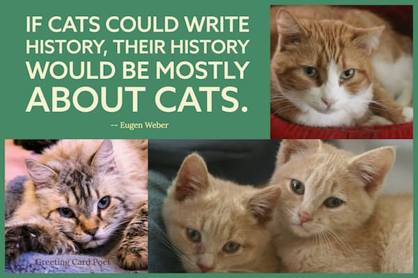 If cats could write history quote