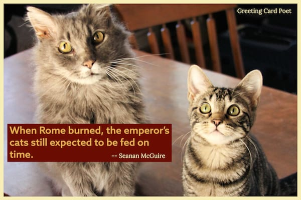 famous cat quote on expecting to be fed image