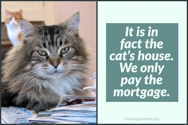 the cat's house we only pay the mortgage image