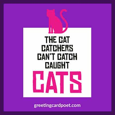 the cat catchers can't catch image