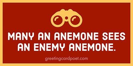 Many an anemone phrase image