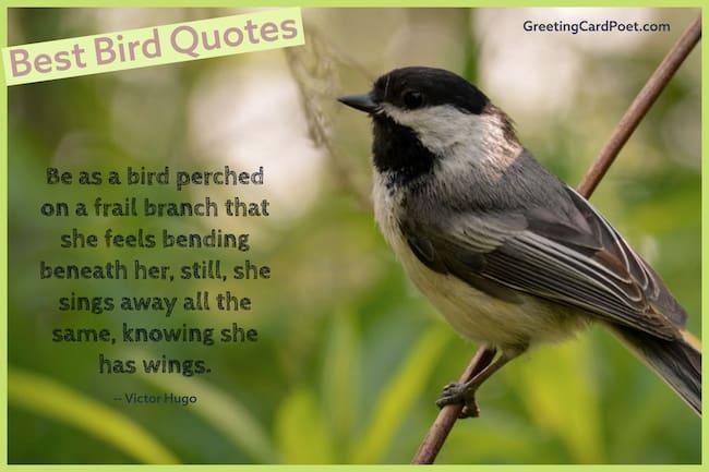 Good Bird quotes image