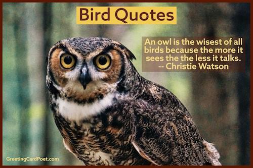 Owl quotations