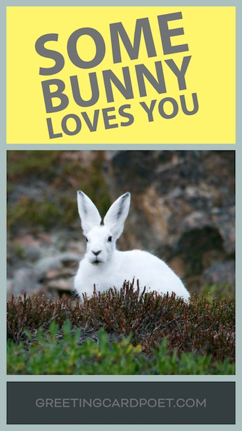 Some Bunny Loves You meme