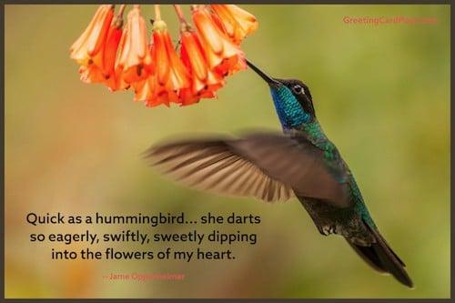 hummingbird quote image