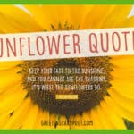 best sunflower quotes image