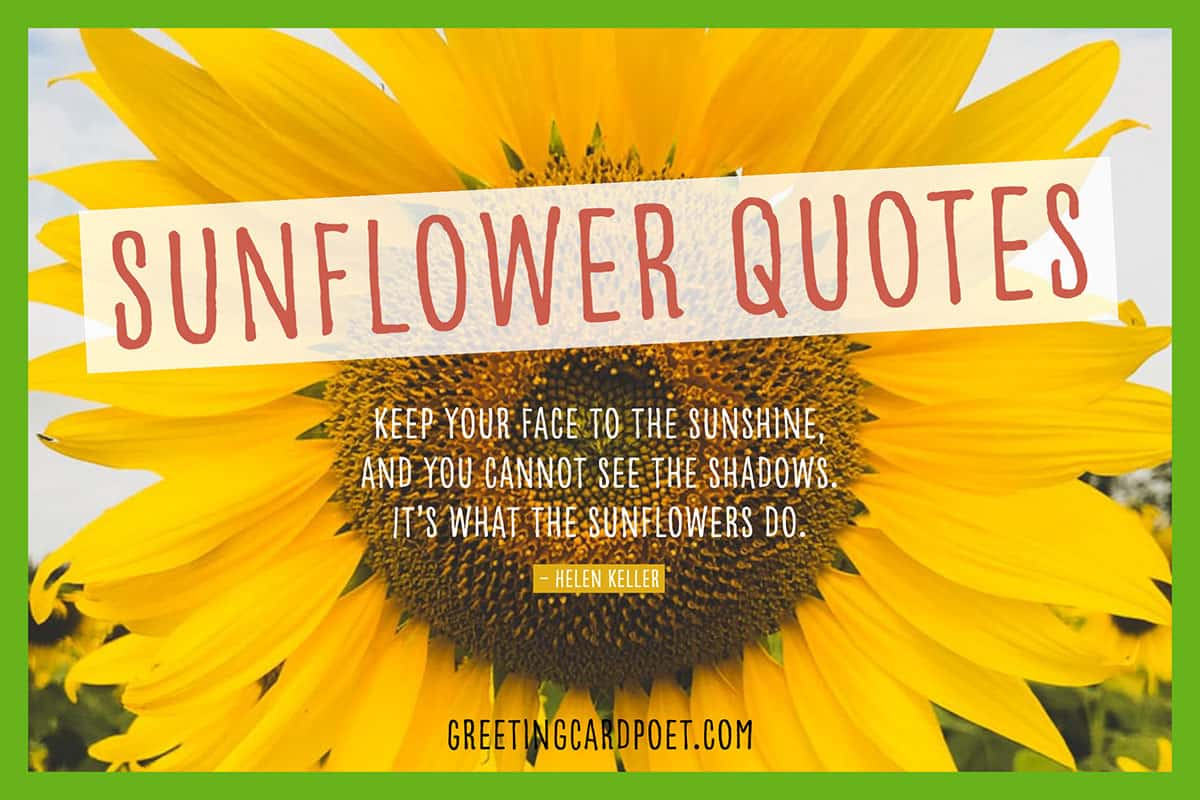 57 Sunflower Quotes To Find Light And Spread The Seeds Of Happiness