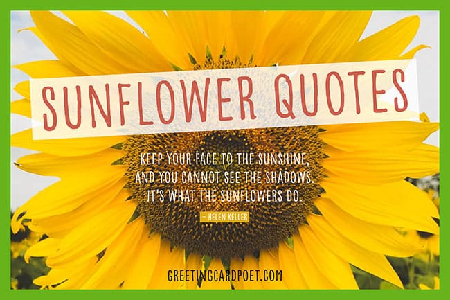 cute sunflower quote meme