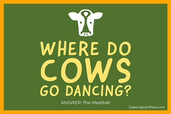 Where do cows go dancing - funny riddles