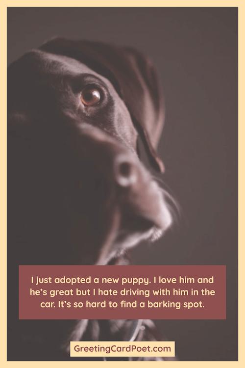 Funny puppy joke meme