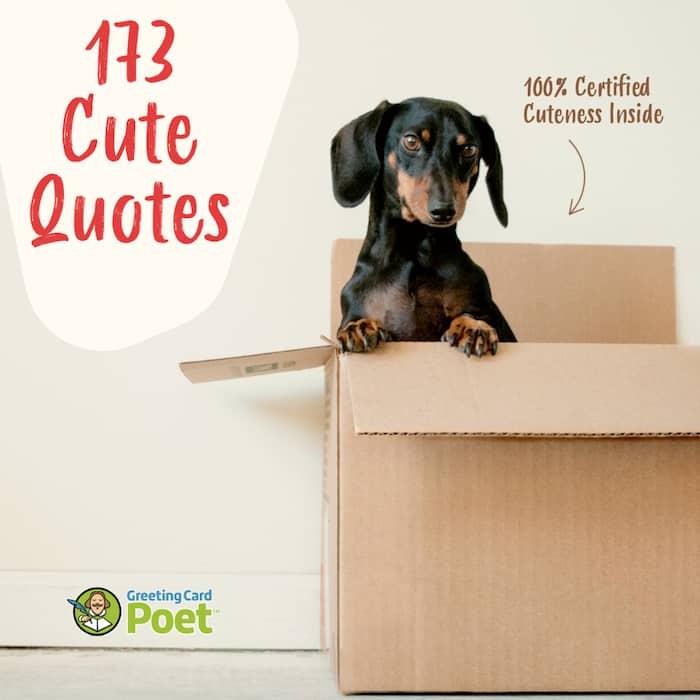 173 Cute Quotes