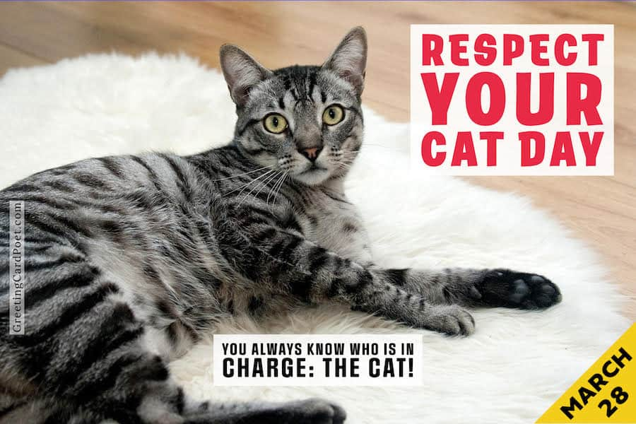Respect Your Cat Day Fun Facts