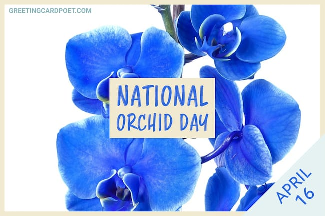 National Orchid Day