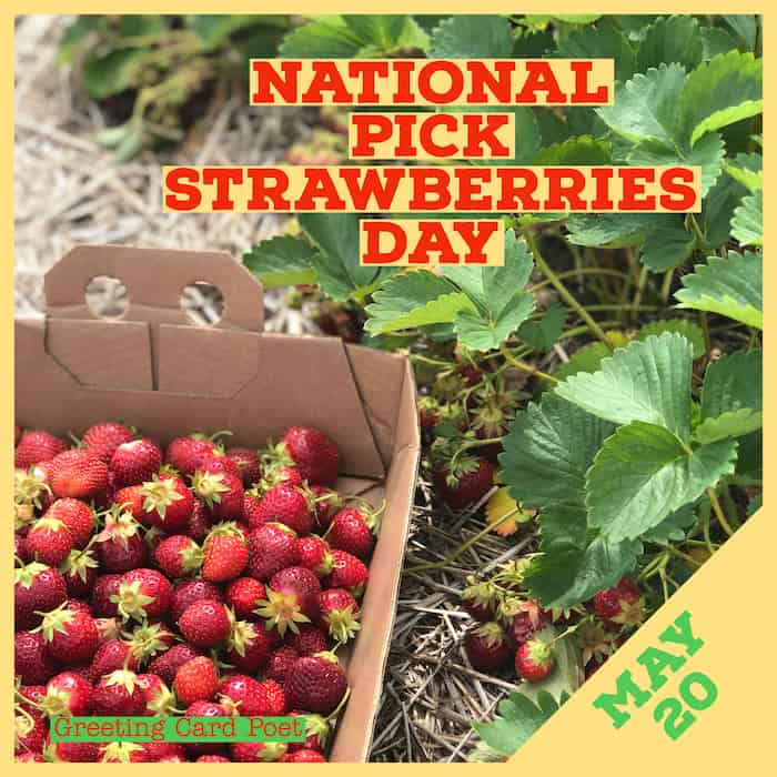 National Pick Strawberries Day