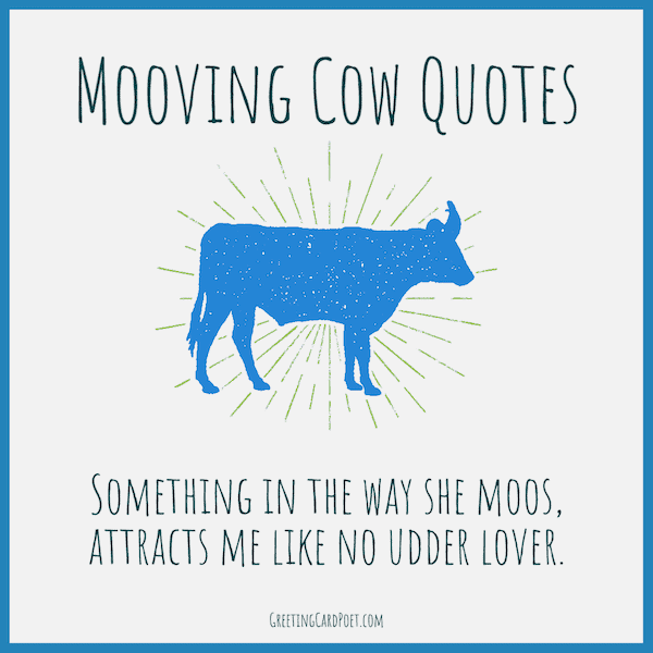 Cute cow quotes