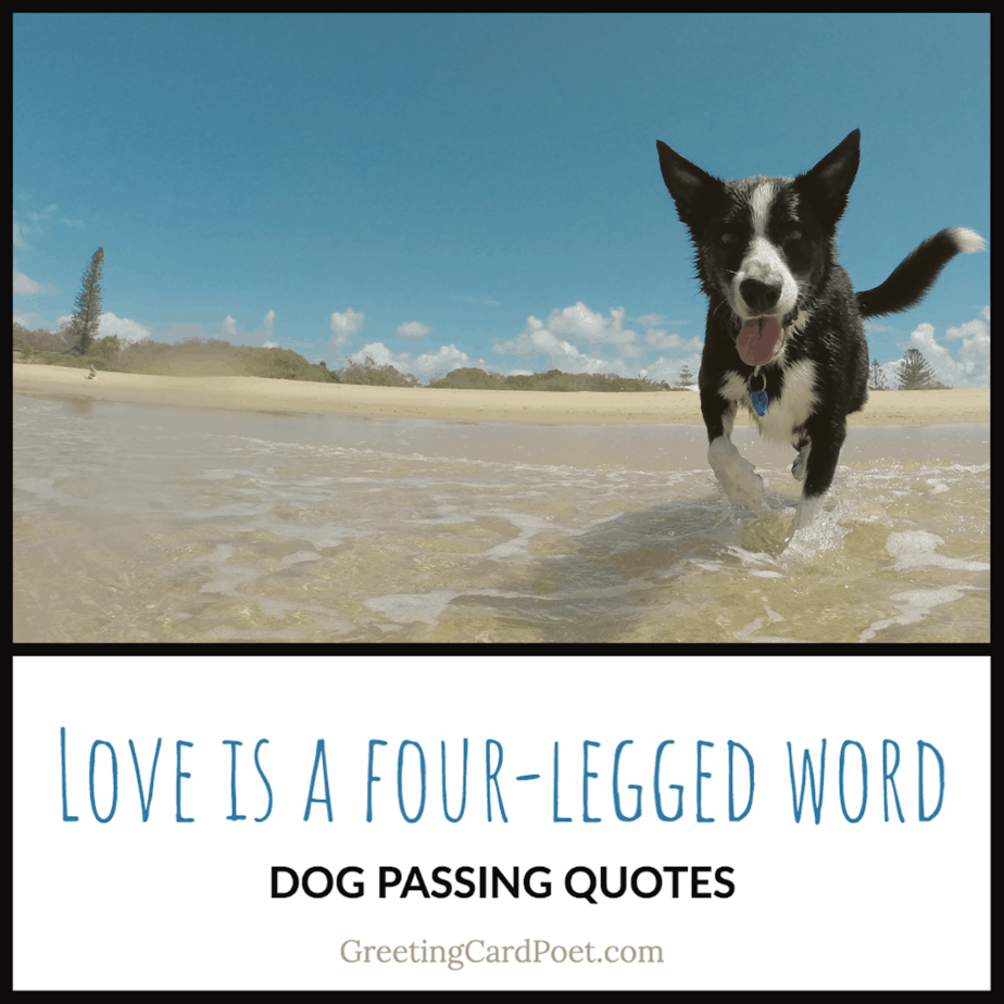 Loss of dog quotes