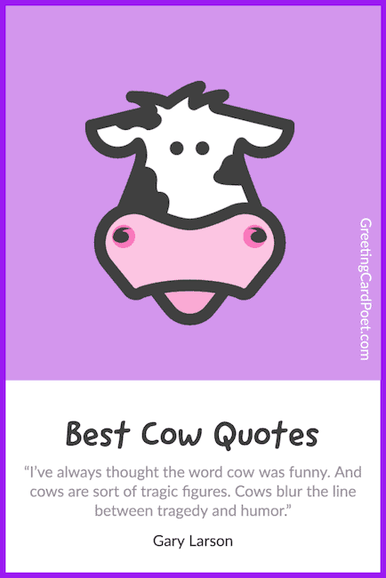 funny cow quotes